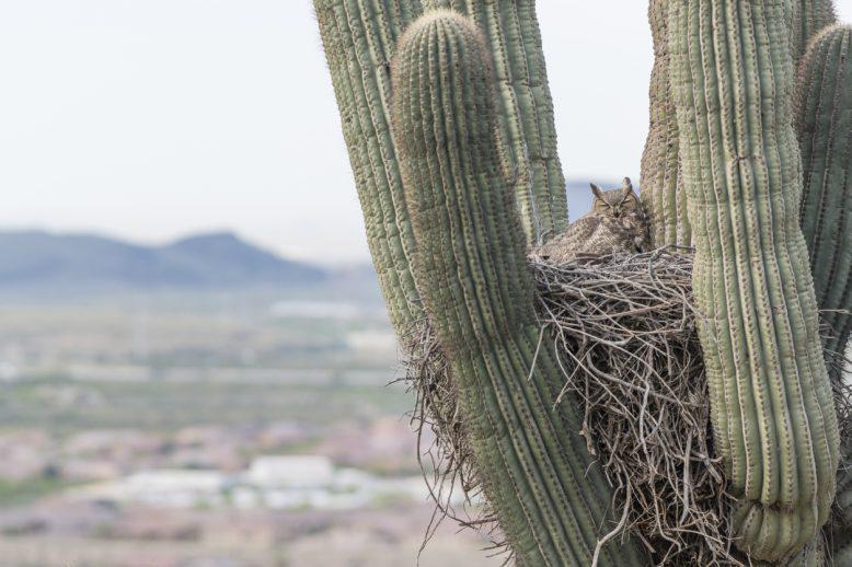 <span>The Desert Owl Population Improvement Project: Undergrad RDP Spotlight</span>