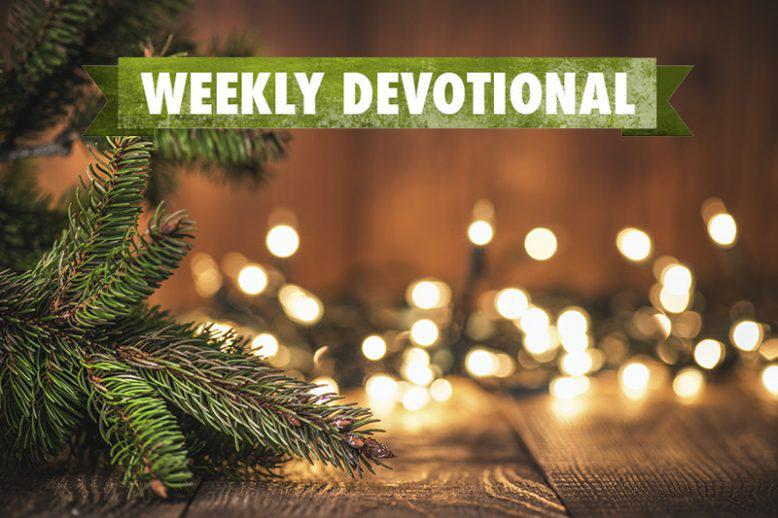 Weekly Devotional: Christmas lights and evergreen branches