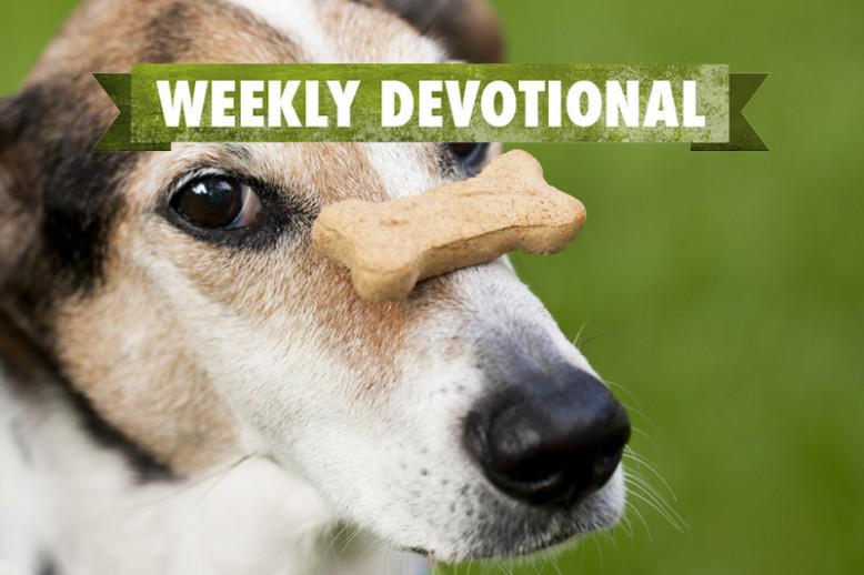A dog with a bone balanced on his nose under the Weekly Devotional banner